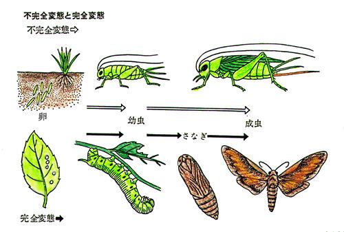 https://www.jataff.jp/konchu/breeding/img/1_1_4.jpg